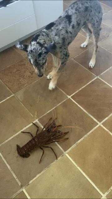 Pup meets cray