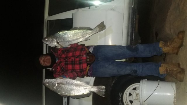 A couple of nice Mulloway from the beach