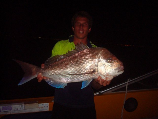 pink snapper at night