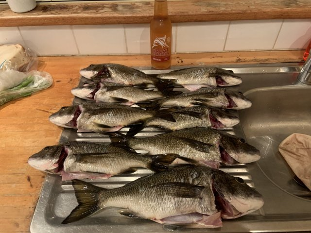 Nornalup Bream 2