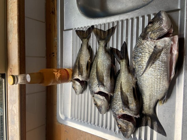Nornalup Bream 1