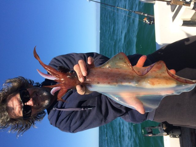 Big squid