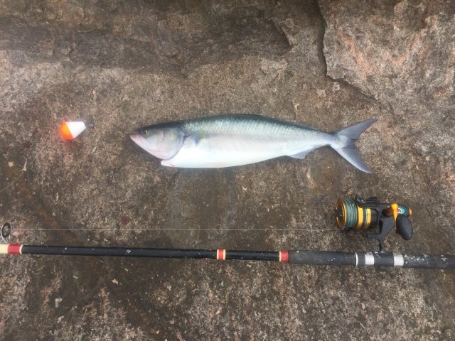First salmon of the season