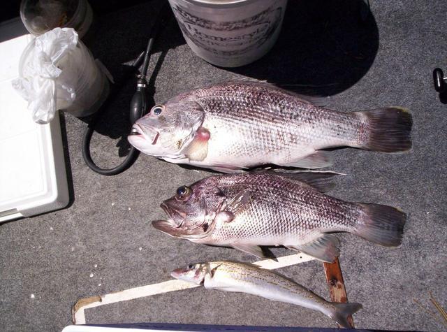 Mindarie Catch 20-01-05