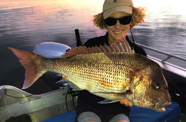 More inshore snapper