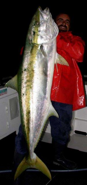 Yellowtail Kingfish at Night