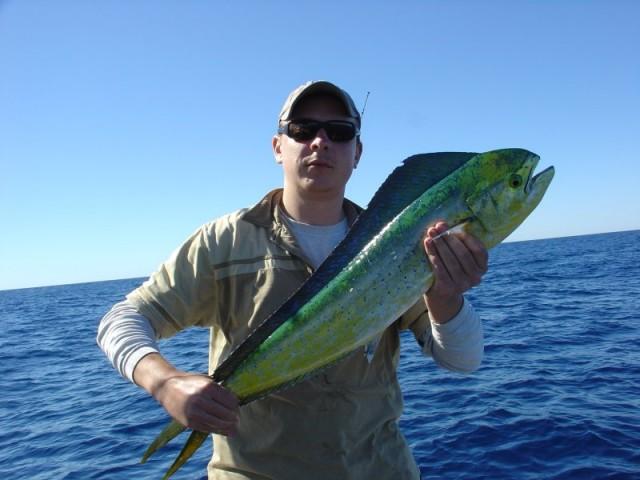 Mark's Dolphinfish