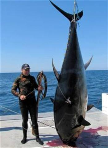 Holy Sh T Thats One Big Tuna Fishing Fishwrecked Com