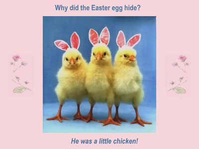 Funny Happy Easter Pictures Friday funnys happy easter