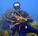 Reefmonkey's picture
